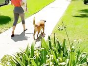 DOG WALKING YAMS. YOGA PANTS BOOTY. BIG ASS WALKING